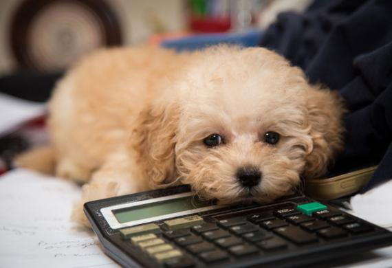 cute-dog-calculator-shutterstock_233252272