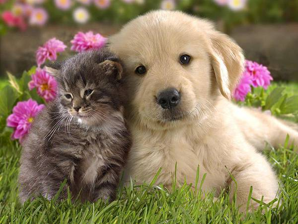Cute-Dog-and-Cat