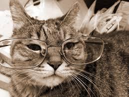 「old cat」的圖片搜尋結果