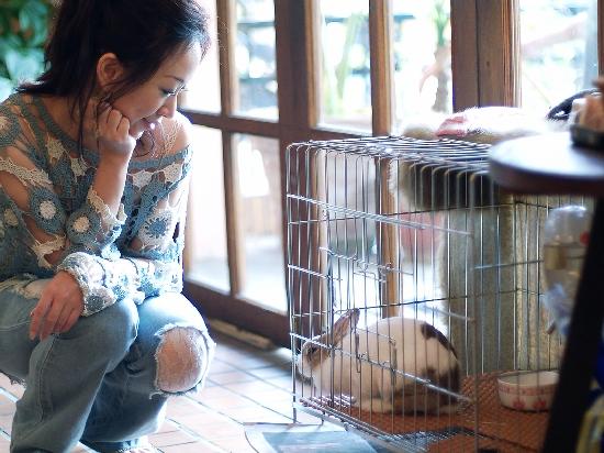 這兒有隻可愛的小兔兔Momo