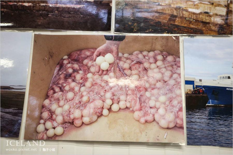 [冰島] 鯊魚博物館 Bjarnarhöfn Shark Museum 太震撼的味覺體驗!