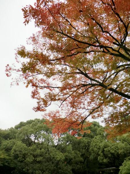 Day02-1明治神宮 (68)
