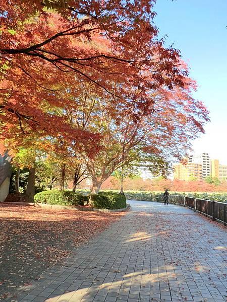 上野恩賜公園 (7)