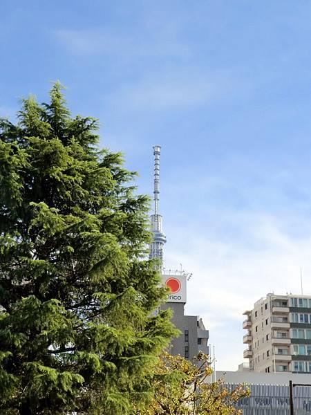 從淺草寺拍天空樹 (2)