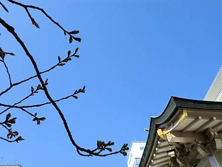 難波神社 (6)