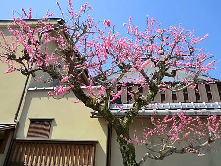 八阪神社 (33)