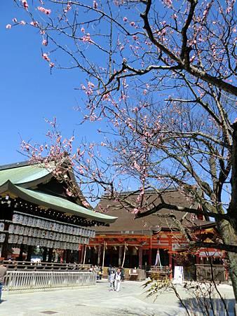 八阪神社 (13)