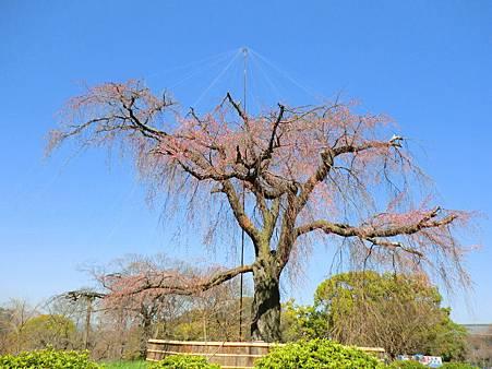 八阪神社 (17)