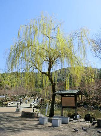 八阪神社 (18)