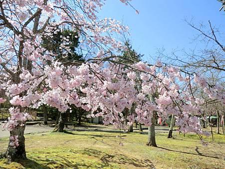 八阪神社 (20)