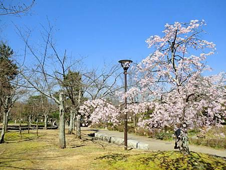 八阪神社 (25)