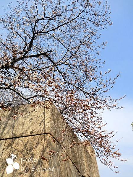 大阪城 (16)