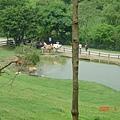 2008.04.13 飛牛牧場 071.jpg