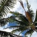 2009.01.26 長灘島Boracay (27).jpg