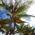 2009.01.26 長灘島Boracay (49).jpg