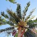 2009.01.28 長灘島 Boracay (78).jpg