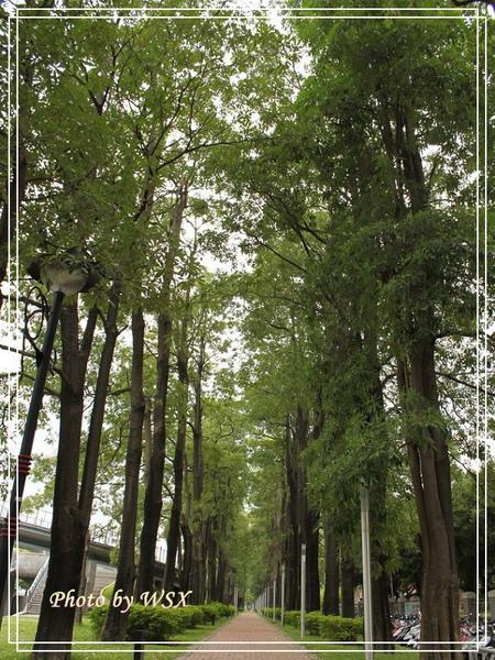 01 行道樹.jpg