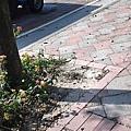 C360_2014-01-31-11-37-47-617.jpg