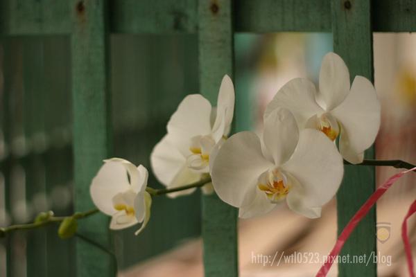 C06_0401_R00-阿嬤種的花.jpg