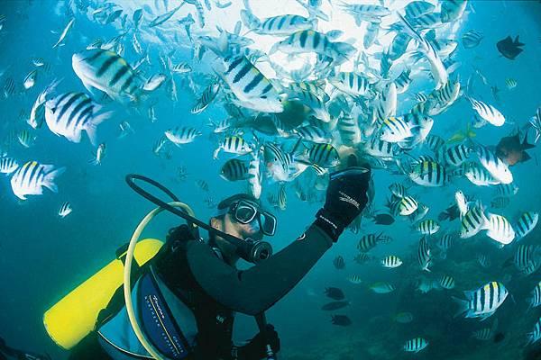 Diving & Fishfeeding.jpg
