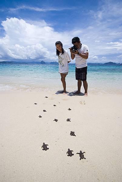 elnido 小海龜
