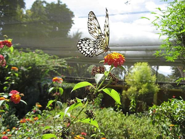 butterfly garden palawan