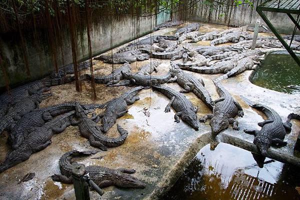 鱷魚農場.jpg