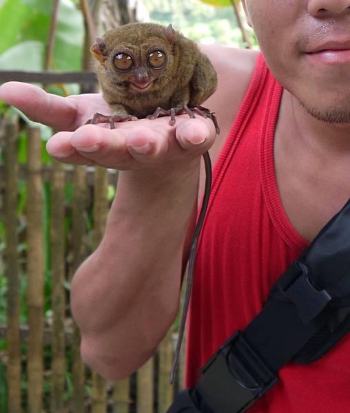 眼鏡猴P1130441 (39).jpg
