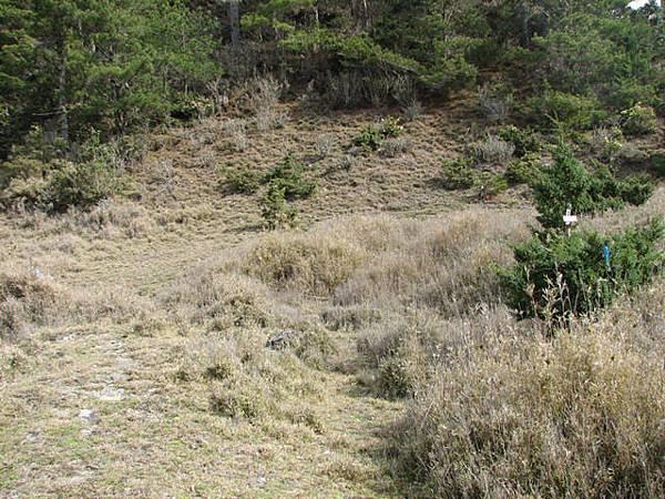 旁邊就是要往丹大山的叉路口