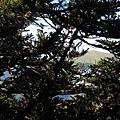 只能從樹林裡看合歡北峰