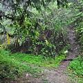 林道上鹿屈山登山口