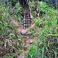 捷徑入口的木梯