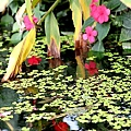 雙龍國小小池塘