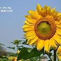 2012嘉義花海節(1).jpg