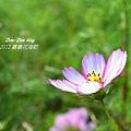 2012嘉義花海節(23).jpg