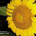 2012嘉義溪口花海節(5).jpg
