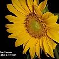 2012嘉義溪口花海節(11).jpg