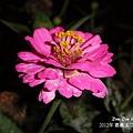 2012嘉義溪口花海節.jpg