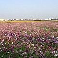 2010嘉義花海節(2).jpg