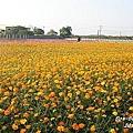 2010嘉義花海節(6).jpg