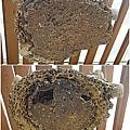 2011蜜蜂故事館(4).jpg