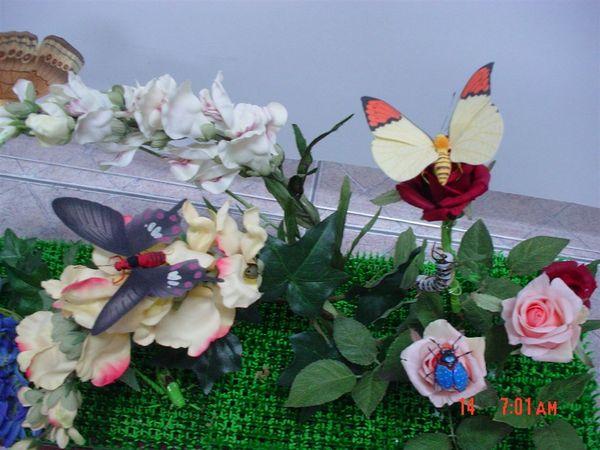端紅蝶 花金龜