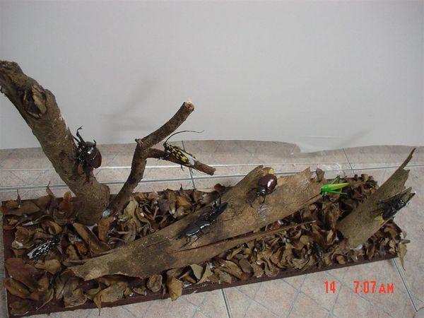 枯木落葉區