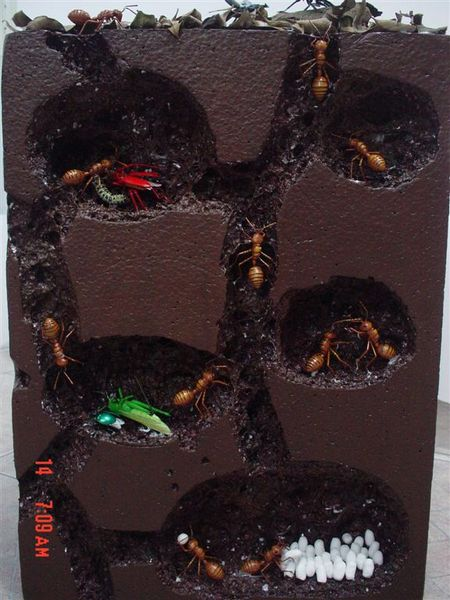 螞蟻的地底巢穴