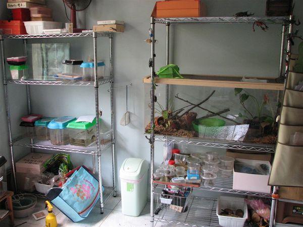 昆蟲老師的蟲室
