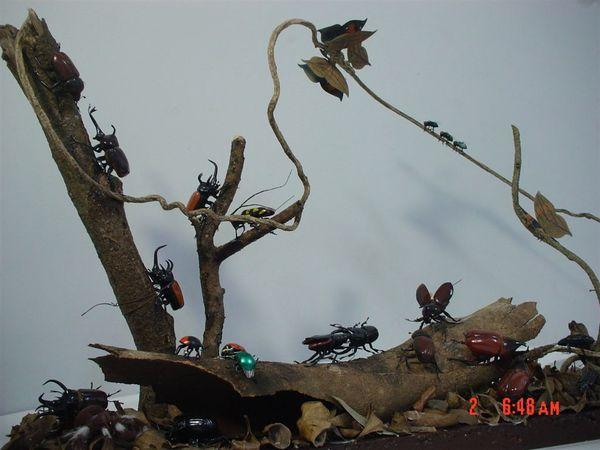枯葉蝶 毛蜘蛛