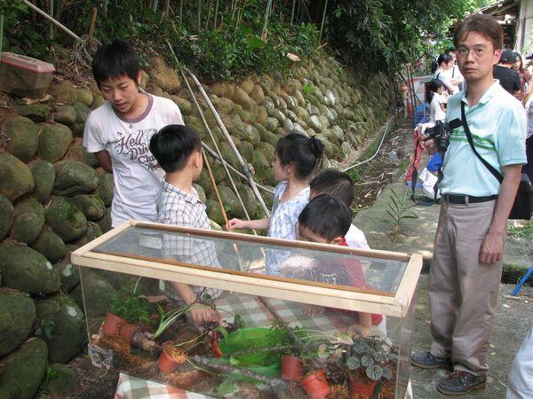 蛙類生態箱