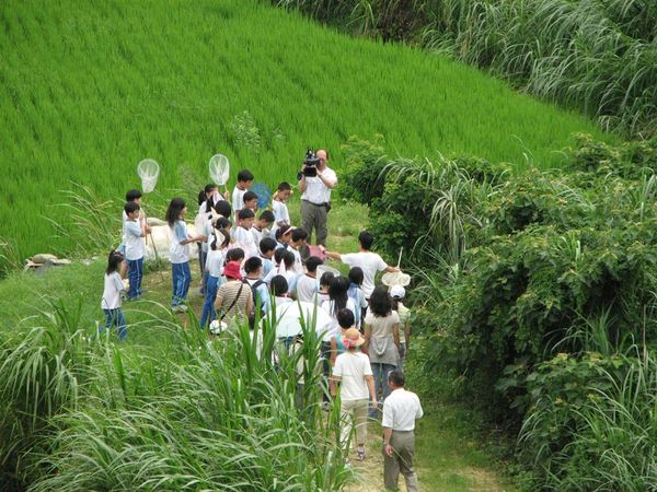 綠油油的水稻田