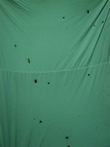 各式各樣的夜行性昆蟲