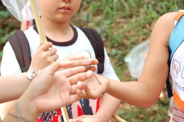 歐歐 小朋友最愛的可愛竹節蟲
